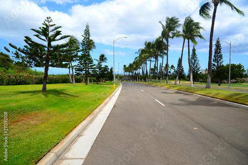 ハワイのヤシ並木