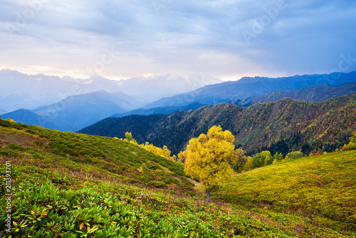 Plexiglas Herfst Autumn landscape with beautiful tree in the mountains