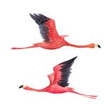Watercolor flamingo illustration - 211401734
