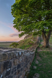 Beautiful landscape image of Sycamore Gap at Hadrian's Wall in Northumberland at sunset with fantastic late Spring light - 211402539