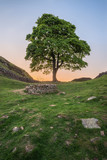 Beautiful landscape image of Sycamore Gap at Hadrian's Wall in Northumberland at sunset with fantastic late Spring light - 211402541