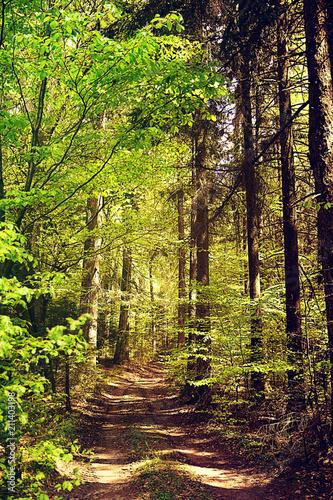 Aluminium Lente Path in the wood, Bavarian countryside