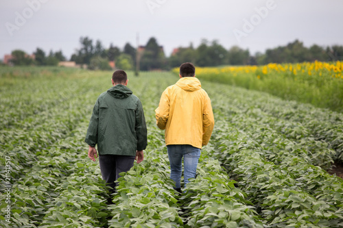 Foto Murales Farmers walking in soybean field