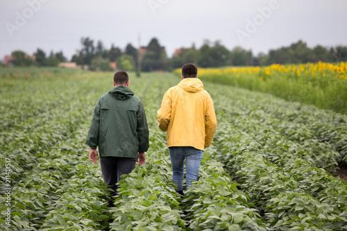 Farmers walking in soybean...