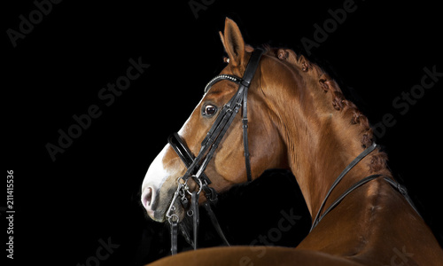 Fotobehang Paarden Horse black background