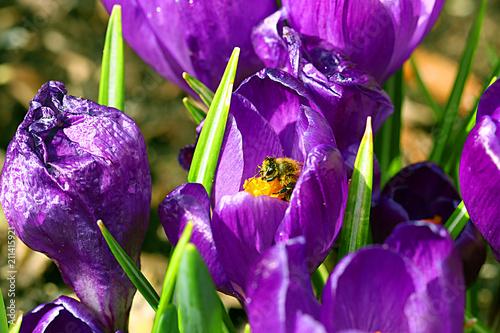 garden - 211415921