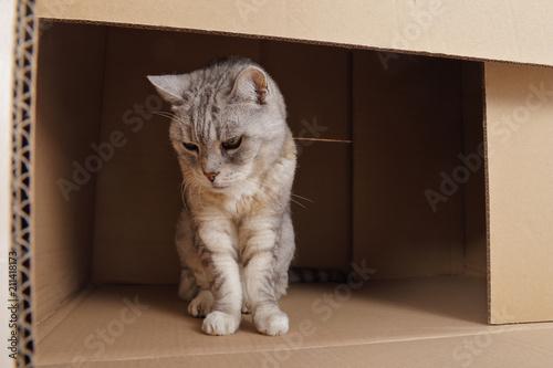 Fotobehang Kat chat senior tigré gris dans caisses en carton