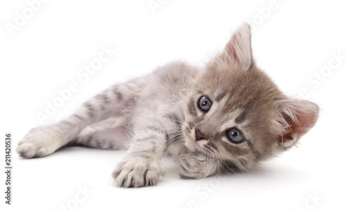 Small gray kitten. - 211420536