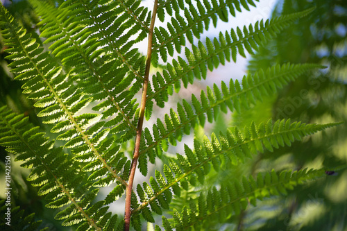 A carved green leaf of a fern is pictured against blue sky background