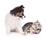 puppy and kitten look at each other. isolated on white background - 211475378