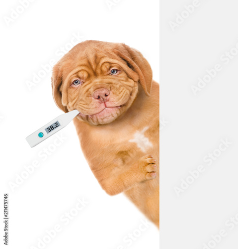 Sticker sick puppy with a thermometer in his mouth  behind white banner. isolated on white background
