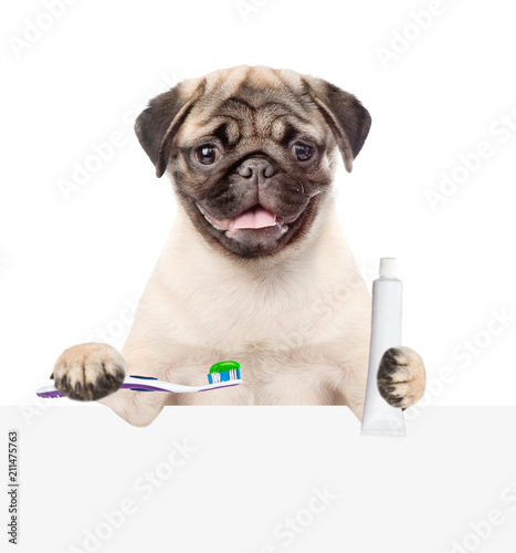 Leinwanddruck Bild Pug puppy with a toothbrush and a tube of toothpaste above white banner. isolated on white background