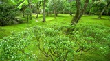 moss covered garden in a peaceful grove - 211481934