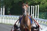 cheval de courses - 211495134