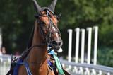 cheval de courses - 211497171