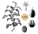 Fototapety Coffee branch,Coffee flower,Coffee bean hand drawing vintage clip art isolated on white background