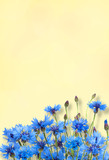Nature Summer Flowers background