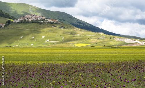 Aluminium Pistache giallo e viola