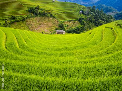 Aluminium Rijstvelden Scenic landscape of terraced rice field with farm hut, Mu Cang Chai, Yen Bai Province, northern Vietnam