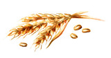 Ears of wheat and seeds. Watercolor hand drawn illustration, isolated on white background - 211527768