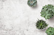 Leinwanddruck Bild - minimalist background with various succulents on a painted white wooden desk, top view, copyspace