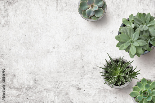 Leinwanddruck Bild minimalist background with various succulents on a painted white wooden desk, top view, copyspace