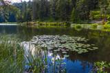 Seerosen am Möserer See