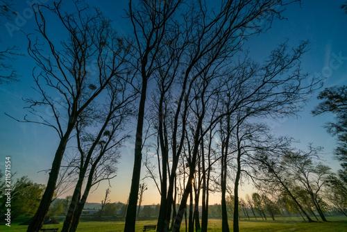 Fotobehang Nachtblauw Sunrise in urban park. Early morning