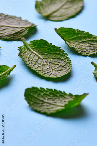 Mint leaves with water drops on a blue background. Natural layout - 211573133