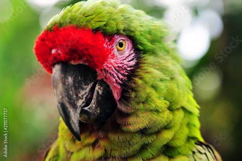 Fotobehang Papegaai Close up of a parrot in a garden. Concept: Nature, animals, zoo