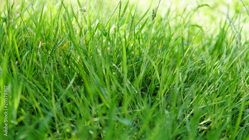 close-up green grass background - 211578907