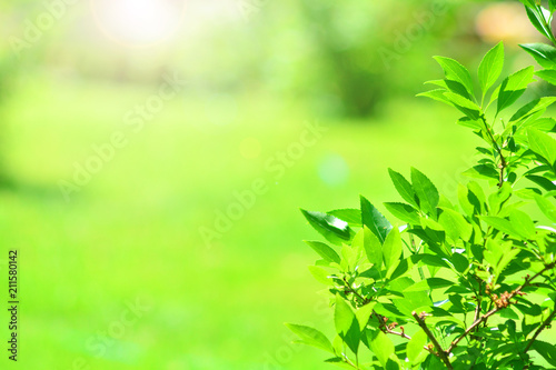 Garden landscape background. Little tree with a blurred grass on a backdrop. - 211580142