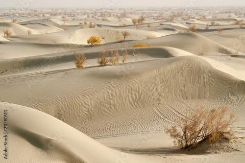 Fototapeta Spring in Desert in Xiqiang, Northern China
