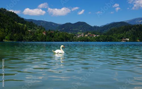 Fotobehang Zwaan Swan on blue lake