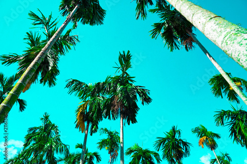 Fotobehang Turkoois Palm trees vintage toned , Fashion, travel, summer, vacation and tropical beach . Creative made of green tree leaves.