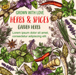 Herb and spice sketch poster of herbal food design - 211624153