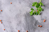 Oregano branches on a gray concrete background with peas of red pepper. With copy space. - 211627109