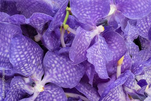 Fine art still life color floral macro image of a bouquet of a violet orchid blossoms