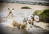 Dogs on the Beach
