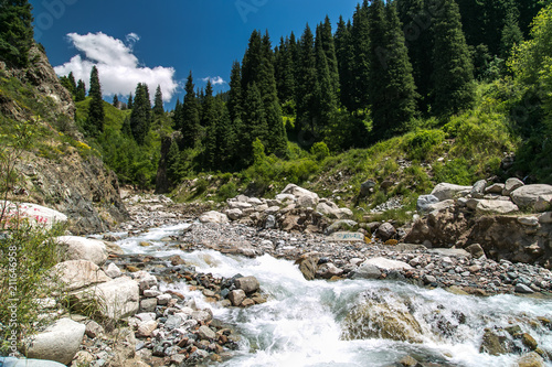 Aluminium Bergrivier Amazing bubbling mountain river. Trees, rocks around the mountain river. Kyrgyzstan.