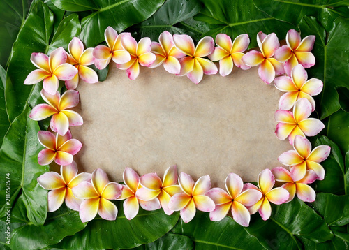 Fotobehang Plumeria Floral frame made of plumeria, frangipani flowers and green leaves with copy space.