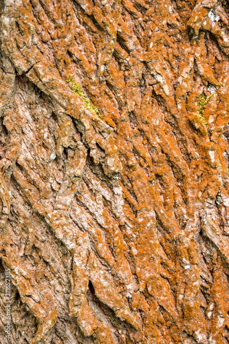 rough brown tree bark surface texture - 211652385