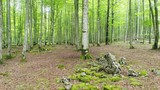 Beautiful beech forest in summer - 211666102