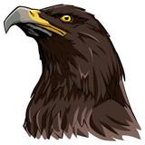 Golden Eagle on White / Hand drawn illustration of a Golden Eagle. - 211669987