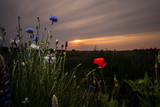 Beautiful red poppies, white daisies and purple cornflowers in a sunset scene