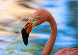 vibrant flamingo reflecting in the noon day sun