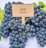 Petit Verdot Grapes & Leaves
