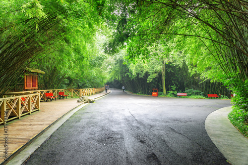Scenic road intersection in bamboo woods. Road through forest
