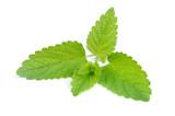 Lemon Balm (Melissa Officinalis) Isolated on White Background - 211730590