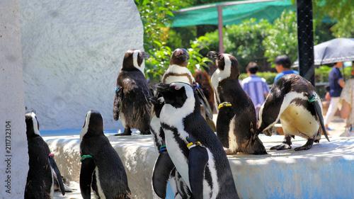 Aluminium Pinguin ペンギン
